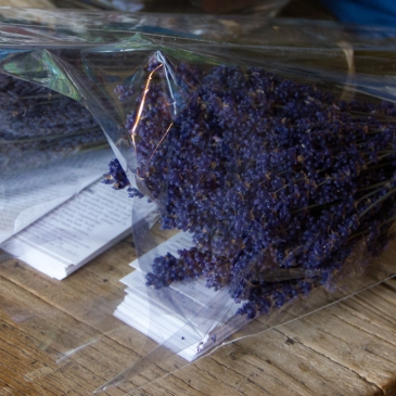 Hamilton Lavender